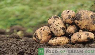 Protégez les pommes de terre!