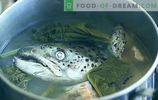 Soupe de têtes de poisson - recettes et subtilités culinaires. Potages de têtes de poisson avec riz, mil, légumes