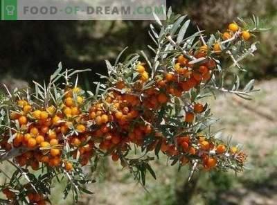Boissons santé à base de fruits et de baies