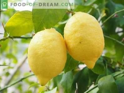 Citrons: avantages et inconvénients