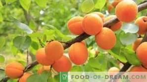 Abricots: effets bénéfiques pour la santé