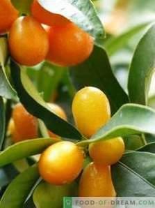 Kumquat: avantages et inconvénients